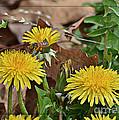 Honey Bee Glee by Debbie Portwood