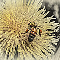 Honey Bee Meets Dandy Lion by Susan Capuano