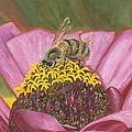 Honeybee On Pink Zinnia by Lucinda V VanVleck