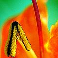 Honeysuckle Spectacular by Ben and Raisa Gertsberg