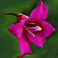 Hong Kong Orchid by Elizabeth Winter