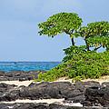 Honolulu Hi 8 by Richard J Cassato