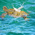 Honu Hawaiian Green Sea Turtle by Lehua Pekelo-Stearns