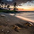 Honu Sunset by Robert Yone