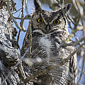 Hoo Are You by Loree Johnson