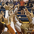 Hook 'em Horns by Tom Gari Gallery-Three-Photography