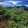 Hookipa Beach Flowers Maui Hawaii by John Burk