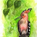 Hoopoe by Angel Ciesniarska