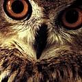 Hoot Owl by Alfredo Martinez