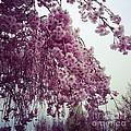 Hopeful Spring by Amanda Barcon