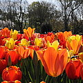 Hopping Hot Tulips by Leesa Toliver