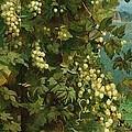 Hops 1882 by Philip Hermogenes Calderon
