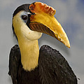 Hornbill 2 by Ingrid Smith-Johnsen