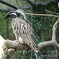Hornbill Bird by Bozena Simeth