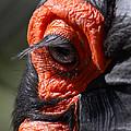 Hornbill Closeup by David Salter