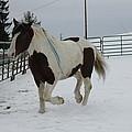 Horse 03 by David Yocum