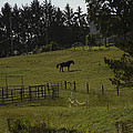 Horse 28 by David Yocum