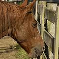 Horse 31 by David Yocum