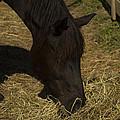 Horse 34 by David Yocum