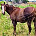 Horse 5 by Dawn Eshelman