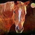 Horse 7 by Mark Ashkenazi