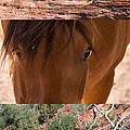 Horse And Canyon by Natalie Rotman Cote