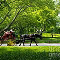 Horse And Carriage Central Park by Amy Cicconi