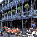 Horse And Carriage In New Orleans by Carl Purcell