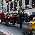 Horse And Carriage Nyc by Amy Cicconi
