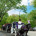 Horse And Carriages Central Park by Amy Cicconi