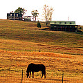 Horse And Farm By Jan Marvin by Jan Marvin
