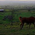 Horse And Farmhouse by Richard Cheski