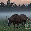 Horse And Fog by Cheryl Baxter