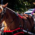 Horse And Rider by Jon Cody
