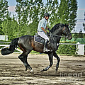 Horse And Rider by Nihat Uysal
