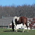 Horse And Shadow by Tina M Wenger