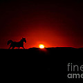 Horse And Sunset by Tommy Anderson
