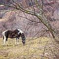 Horse And Winter Berries by DAC Photo