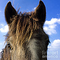 Horse by Bernard Jaubert