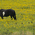 Horse  Birds  And Flowers   #8520 by J L Woody Wooden