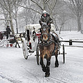 Horse Carriages In Snowy Park by Dave Beckerman