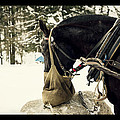 Horse Cinema Style by Pati Photography
