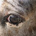 Horse Close Up by FL collection