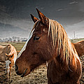 Horse Composition by Brett Engle