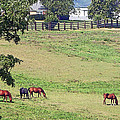 Horse Country by Aimee L Maher ALM GALLERY