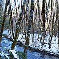 Horse Creek No. 2 by Belinda Greb