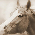 Horse Cutting Through Fog - Sepia by Aurelio Zucco