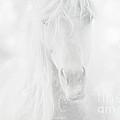 Horse Dream by Christina Williams