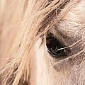 Horses Soul by Athena Mckinzie