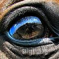 Horse Eye by Daliana Pacuraru